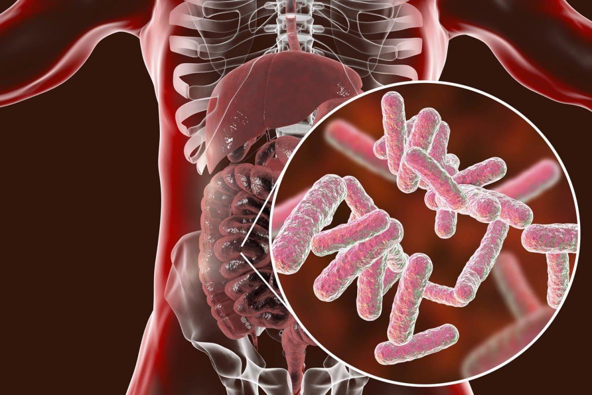 Perte de poids : découvrez le rôle insoupçonné de certaines bactéries intestinales dans l'élimination de la graisse !
